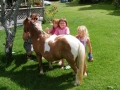 Playing with the minature ponies, Pukenui Holiday Park