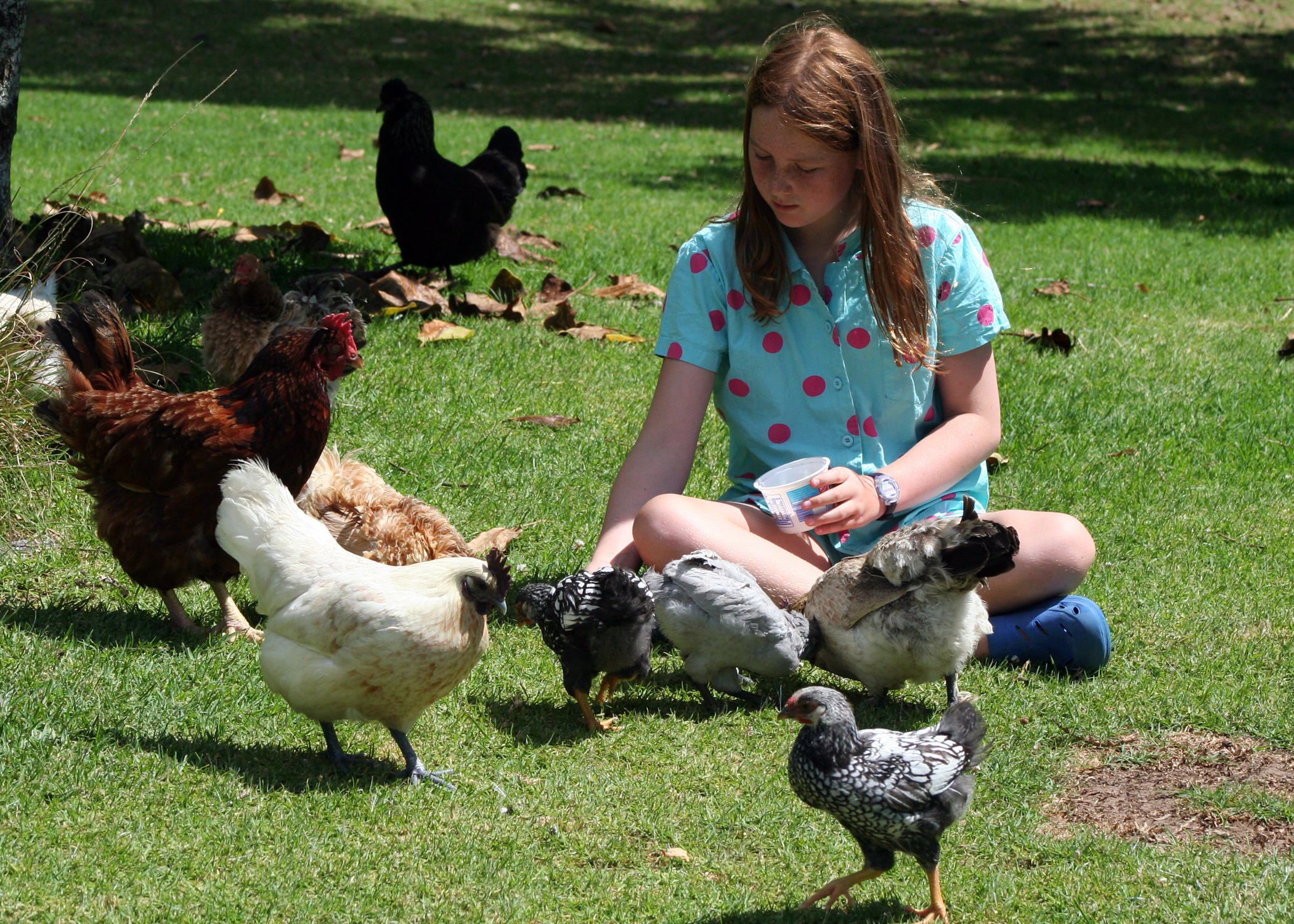 chooks and ducks at Pukenui Holiday Park