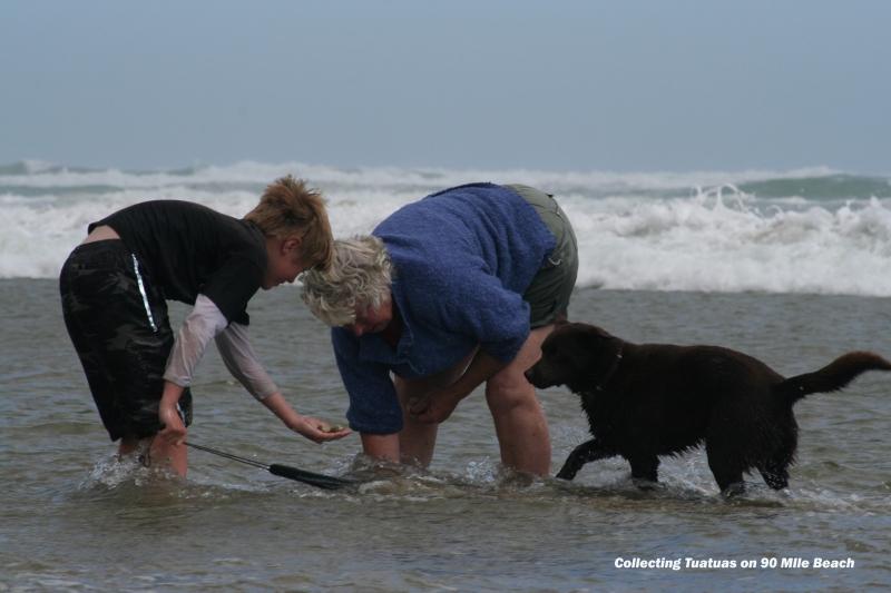 collecting-Tuatuas-90-mile-beach