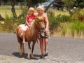 Minature ponies at Pukenui Holiday Park