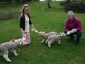 pet lambs in spring at Pukenui Holiday Park
