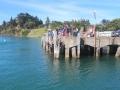 Pukenui Wharf (6)