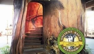 Kauri staircase at Kauri Kingdom, 20 mins